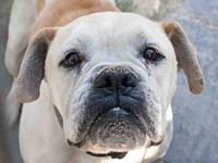 Rufus #A449881 @ Pasadena's story *THIS DOG IS NOT IN