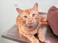 Rufus's story Rufus is a handsome 3 year old male