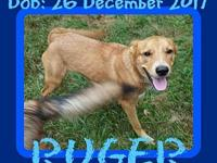 RUGER-1's story Please contact Jenny Cope