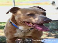 *RUGER's story VOLUNTEER NOTES: Hi! The name`s Ruger.