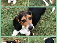 Ruger's story Ruger is taking applications for his