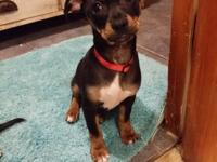 Ruger is about 3 1/2 months old. He was rescued from a