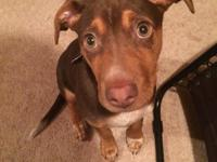 Hello my name is Ruger! I am a 4 month old mix breed,