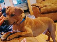 Ruger's story Ruger is a young, sweet boy - great with