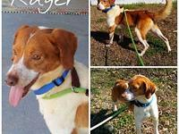 Ruger's story I came in with Ranger. We both would love