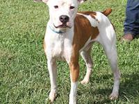Ruger's story Ruger is a handsome 1-1/2 year old male