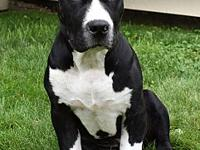 Ruger's story Hi, my name is Ruger and Im looking for