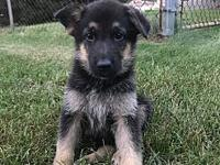 Rumer-Pending!'s story Rumer is part of a litter of 5