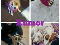 Rumor's story Rumor is the sweetest pup! This precious