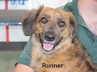 Runner's story Say hello to Runner! He's a mid-age,