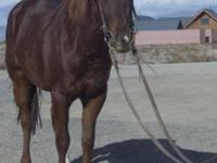 This little sorrel mare is coming 6 this next year. She