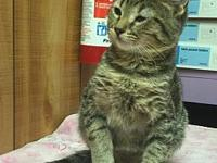 Runt's story -- -- Kitten Division Adoption Center,