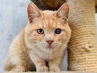 Rupert's story Rupert is an affectionate young man with