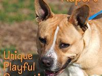 Rupert's story Rupert is one powerful dog! He's also a
