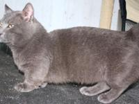 * Beach. I have a 2 years of age Russian Blue Male