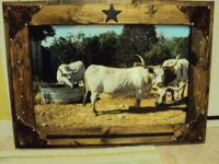 Original Photos of Texas LongHorn Steer from the Palo