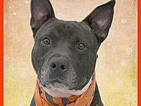 Rusty's story (A34430294) Hi, this is Rusty, Rusty is a