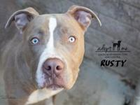 Rusty's story Rusty is a young bully mix who came in as