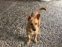 Rusty - Male - Chihuahua/Dachsund Mix     Looking for