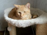 Rusty was found with 5 other kitties living around a