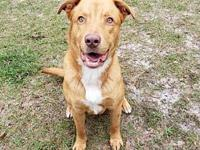Rusty's story Rusty is a playful 2 year old Retriever /