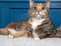 My story Ruth is a lovely and calm dilute calico who is