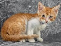 My story Primary Color: Orange Tabby Secondary Color:
