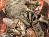 My story Ruthie is a four month old, gray tabby with