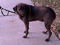 My story Dog Name:Ryan (dark brown