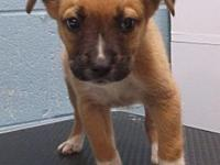 Rydell's story This 9 week male Spaniel/ Hound mix is