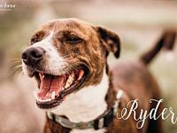 Ryder's story Just look at that big smile on our boy,