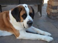 4 year old smooth coated boy Ryder was rescued from a