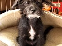 Ryder is a terrier mix, 4 months old, and weighs in at
