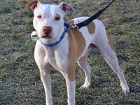 Ryder's story Ryder is a male, 4-6 year old Terrier mix