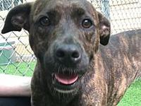 Rylee's story Rylee is a Plott Hound mixed breed, who