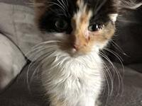 Sable's story Sable is a tiny kitten that was born to a