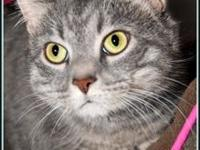 SABLE's story **NO FEMALE CATS $97.50 FEE INCLUDES: