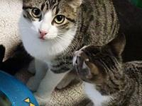 Sabrina's story Sabrina is a sweet, young kitty with