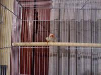 I have a male zebra finch that I am parting with for a
