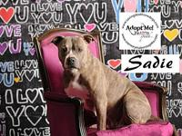 Sadie's story Hello, I am Sadie! Thanks for visiting my