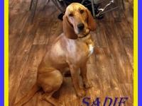 Sadie is a sweet and very pretty.blood hound recently