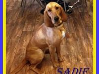 Sadie's story Sadie is a sweet and very pretty.blood