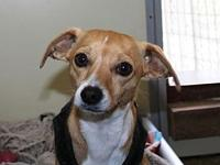 Sadie's story Sadie is a 2 1/2 year old spayed female