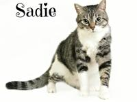 Hello my name is Sadie!! I can be very sweet, and calm,