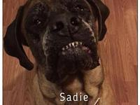 Sadie's story You can fill out an adoption application