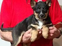 Sadie's story See more adoptable puppies at