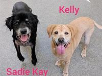 Sadie Kay's story Sadie Kay (black) and Kelly (tan) are