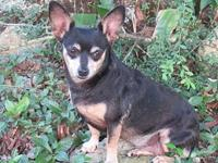 SADIE KAY's story Sadie Kay is a friendly 4 year old,