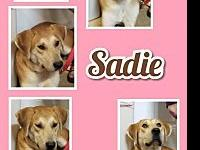 Sadie's story Sadie is such a special girl.  She