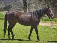 Sadie Mae is a 13-year-old brown mare who has made
